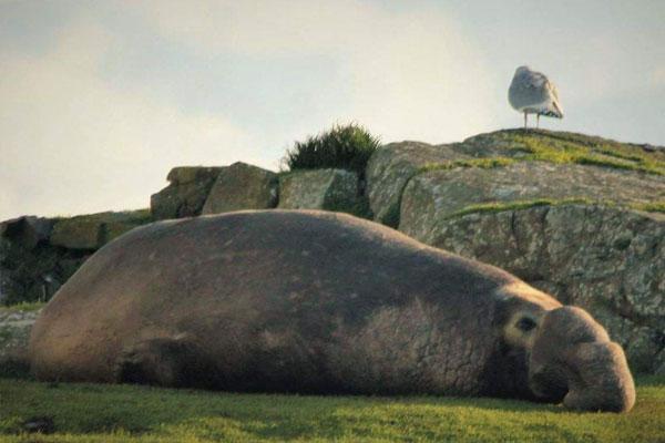 Sustainable tourism habitat degradation - wildlife